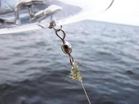 Appel aux plaisanciers: Un crustacé menace de coloniser la rivière Richelieu | Biodiversity protection | Scoop.it