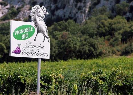 Economie | Les cultures de vin bio progressent | oenologie en pays viennois | Scoop.it
