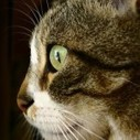 Cat Facts - Interesting Facts about Cats | just ville... | Scoop.it