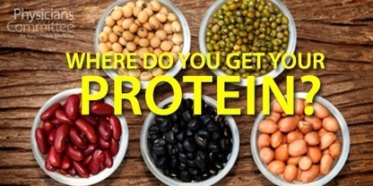 Where do you get your protein? | zestful living | Scoop.it