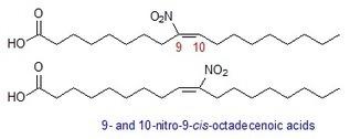 El nanoblog del Gonz: ¿Cómo traducir 'nitro fatty acids'?   Languages   Scoop.it