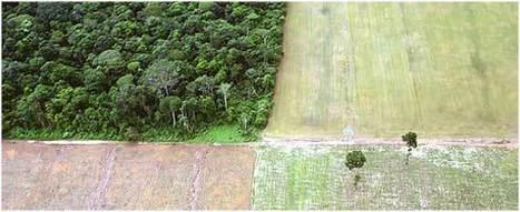 La Desforestacion un mal que nunca acabara.   LA DESFORESTACION DE ARBOLES   Scoop.it