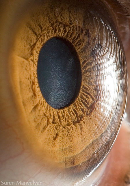 Amazing Photos of Human Eyes | {S}PATIAL .BRAIN | Scoop.it