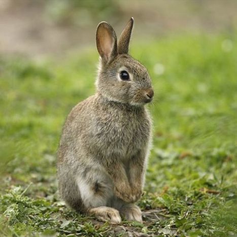 Labor to present animal testing ban policy | Organic Beauty Trends | Scoop.it