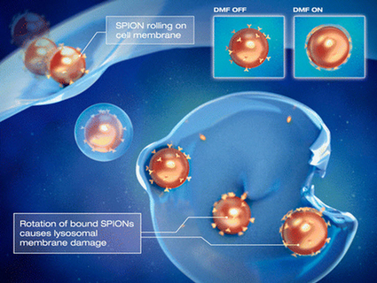 Magnetically controlled nanoparticles cause cancer cells to self-destruct | KurzweilAI | Break through technology | Scoop.it