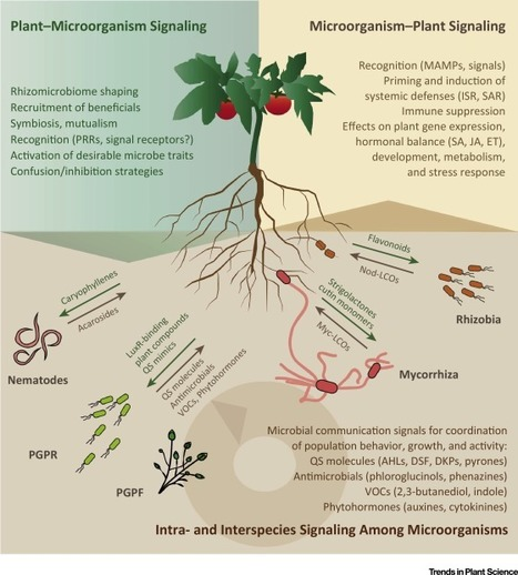 Signaling in the Rhizosphere: Trends in Plant Science | Plant-Microbe | Scoop.it