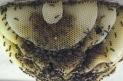 Honeybees are working the RBG | Annie Haven | Haven Brand | Scoop.it
