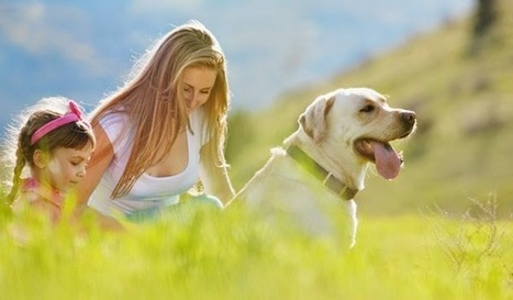 Why Your Dog Could Cost You an Arm and a Paw? ~ Pet Health Blog | Pet Supplies | Scoop.it