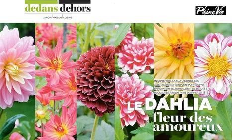 Le dahlia, fleur des amoureux - Pleine Vie - septembre 2016 | Revue de presse Nova-Flore | Scoop.it