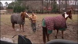 Animal owners on edge after NC horse stabbings remain unsolved - WBTW - Myrtle Beach and Florence SC   Horse Facts & Info   Scoop.it