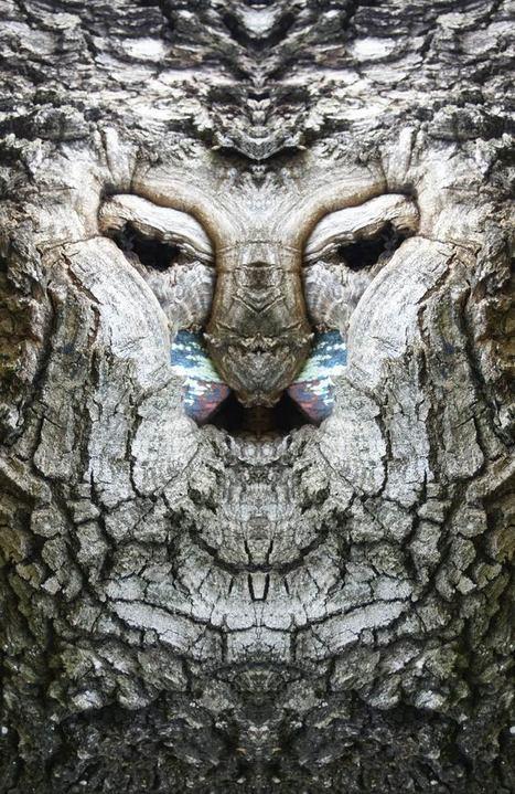 Photographie : Quand un photographe donne un visage aux arbres…   The Blog's Revue by OlivierSC   Scoop.it