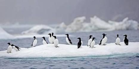 Que sait-on réellement sur l'évolution du climat ? | Climat: passé, présent, futur | Scoop.it