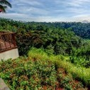 Tropical Drought-Tolerant Plants | Green Asia Force | Green ideas and Sustainable Building Practices | Scoop.it