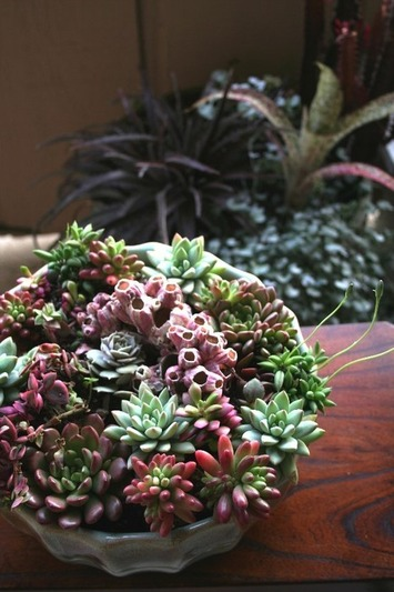 The Rainforest Garden: DIY Coral Reef Succulent Container Garden   Container Gardening   Scoop.it
