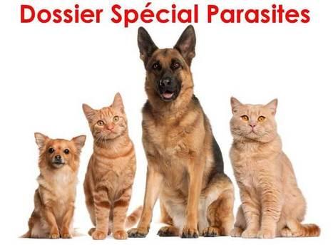 Les aoûtats chez le chat ou le chien traitement et conseils   CaniCatNews-actualité   Scoop.it