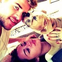 Celebrity Couples Who Have Too Many Pets   Cupid's Pulse: Celebrity Gossip News with Dating, Love, Relationship Advice for Singles, Couples   celebrity pets   Scoop.it