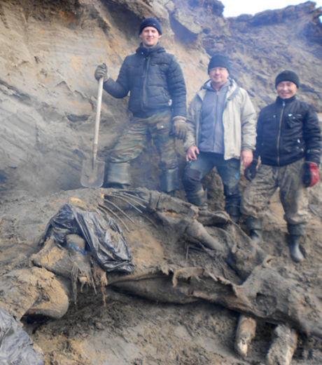 Photos - Un garçon de 11 ans découvre un mammouth congelé | Merveilles - Marvels | Scoop.it