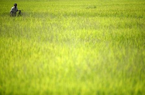 GDF Suez : s'engage avec le Ministère de l'Agriculture en faveur de la transition écologique | Méthanisation Agricole, Collective, Territoriale | Scoop.it