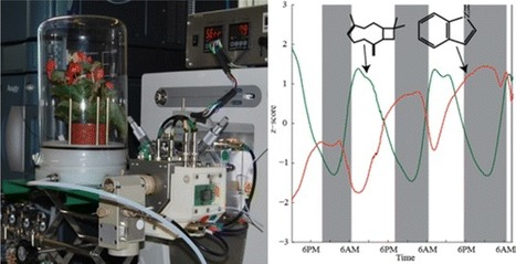 Capturing in Vivo Plant Metabolism by Real-Time Analysis of Low to High Molecular Weight Volatiles | Natural Products Chemistry Breaking News | Scoop.it