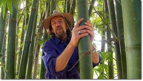 The Power of Bamboo (video) | Sustainable Futures | Scoop.it