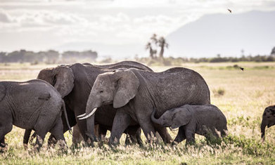 Drones help save Kenya's elephants | Managing Technology and Talent for Learning & Innovation | Scoop.it
