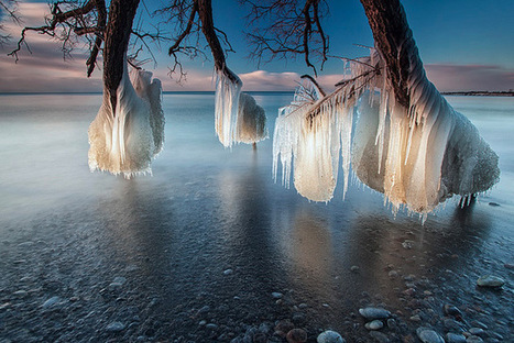 Frozen Trees on the Shores of Lake Ontario | Design Stories | Scoop.it