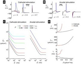 High-Frequency Stimulation of Excitable Cells and Networks | Social Foraging | Scoop.it