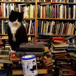 7 Pictures of Cats and Books | About Books | Scoop.it