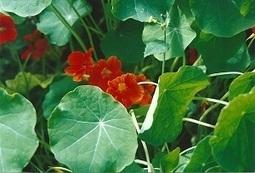 La livraison d'un panier de fruits et légumes biologiques / fermier en circuits court , - notre-planete.info | Agriculture Biologique | Scoop.it