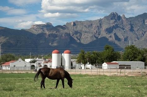 On the Scene in '15: Another Veterinary School | Veterinary Practice News | CALS in the News | Scoop.it