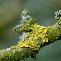 Récolter des algues à biocarburant grâce à des champignons | Algues et énergies | Scoop.it