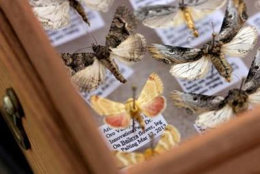 The Moth Hunters | Scientific American | CALS in the News | Scoop.it