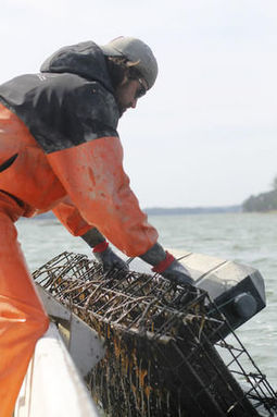 Oyster hatchery sows pearls of wisdom on climate change | Changing Chemistry - The People Impacted by Ocean Acidification | Scoop.it