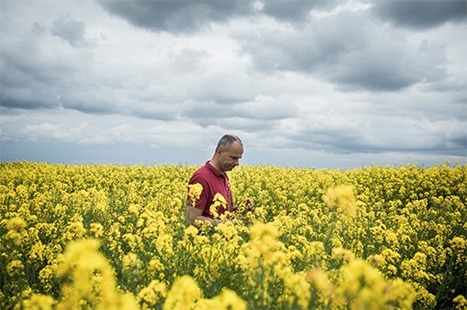 Doubts About the Promised Bounty of Genetically Modified Crops | Health Supreme | Scoop.it