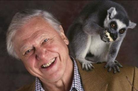 Sir David Attenborough opposes returning wolves to the wild | GarryRogers Biosphere News | Scoop.it