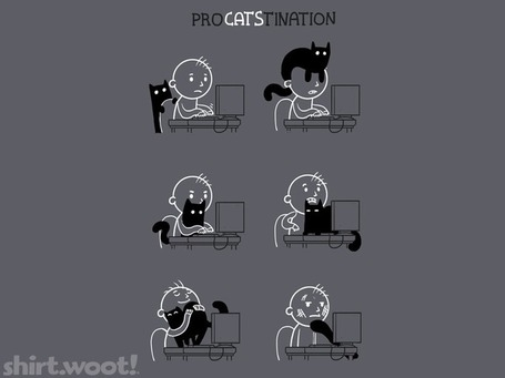 Procatstination3ckDetail.png (768x576 pixels) | Histoire de chats | Scoop.it