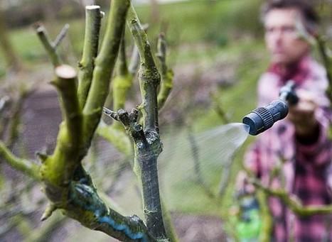Hausse de la TVA des pesticides de 5,5 % à 19,6 % | jardins et développement durable | Scoop.it