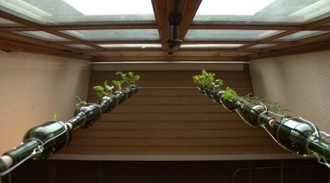 Homegrown Veggies All Winter Long? Yes, Please. | News | Ecohome | iMobileHomes - Interior Gardens for Air Quality | Scoop.it