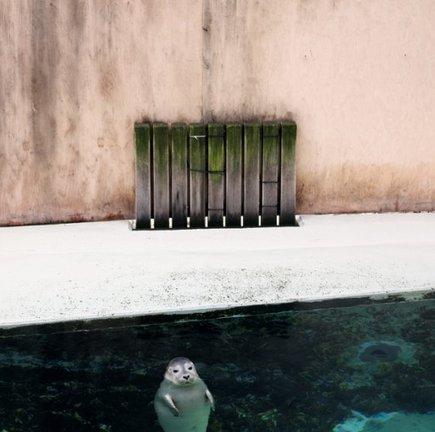 Photo : les animaux solo sublimés d'Eric Pillot | Culturebox | PhotoActu | Scoop.it