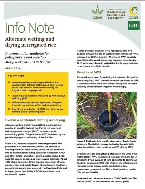 CGAIR Shares Latest Findings on Alternate Wetting and Drying Rice Management System- Oryza | CGIAR Climate in the News | Scoop.it