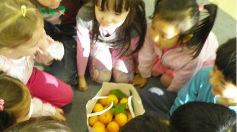 Saku's Tangerines | KC | early childhood education and more | Scoop.it