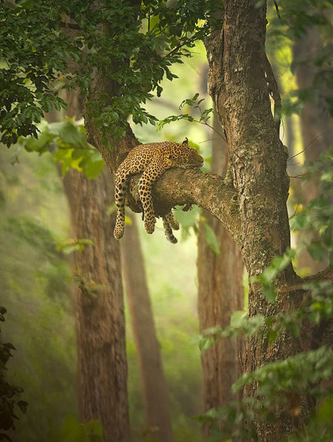 50 Great Examples of Wildlife Photography | Web Design Inspiration | Photos by Doc - Photography | Scoop.it
