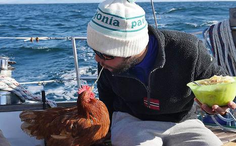 Ce jeune français et sa poule sont bloqués dans les glaces Arctiques   Planete DDurable   Scoop.it