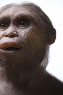 Des «hobbits» peuplaient une île indonésienne, il y a700000ans | Aux origines | Scoop.it