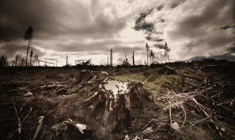 China and India perform badly in deforestation ranking   Nature, climat, environement et santé   Scoop.it