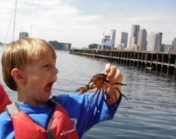 Save Boston Harbor: Bringing Communities Together One Wave At A Time   Y7 Planet Under Pressure   Scoop.it