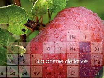 La chimie de la vie | Sagesse, équilibre et écoute du corps | Scoop.it