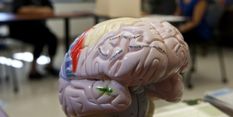10 Myths About Traumatic Brain Injury | Social Neuroscience Advances | Scoop.it