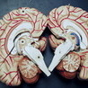 Hersenwerk