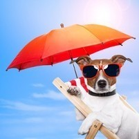 Can You Put Sunscreen on Your Pet?   After Retirement   Scoop.it